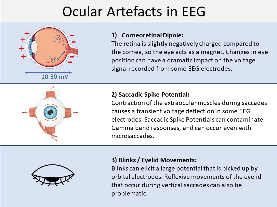 Ocular artefacts EEG and eye tracking