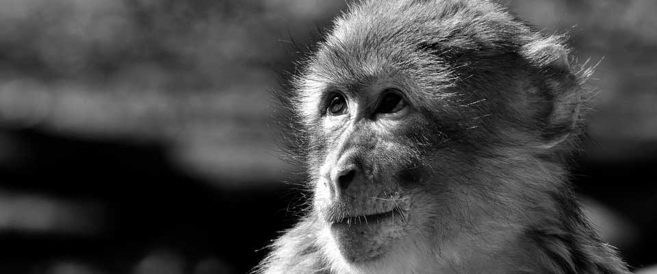Non-human Primate Eye Tracking Solutions